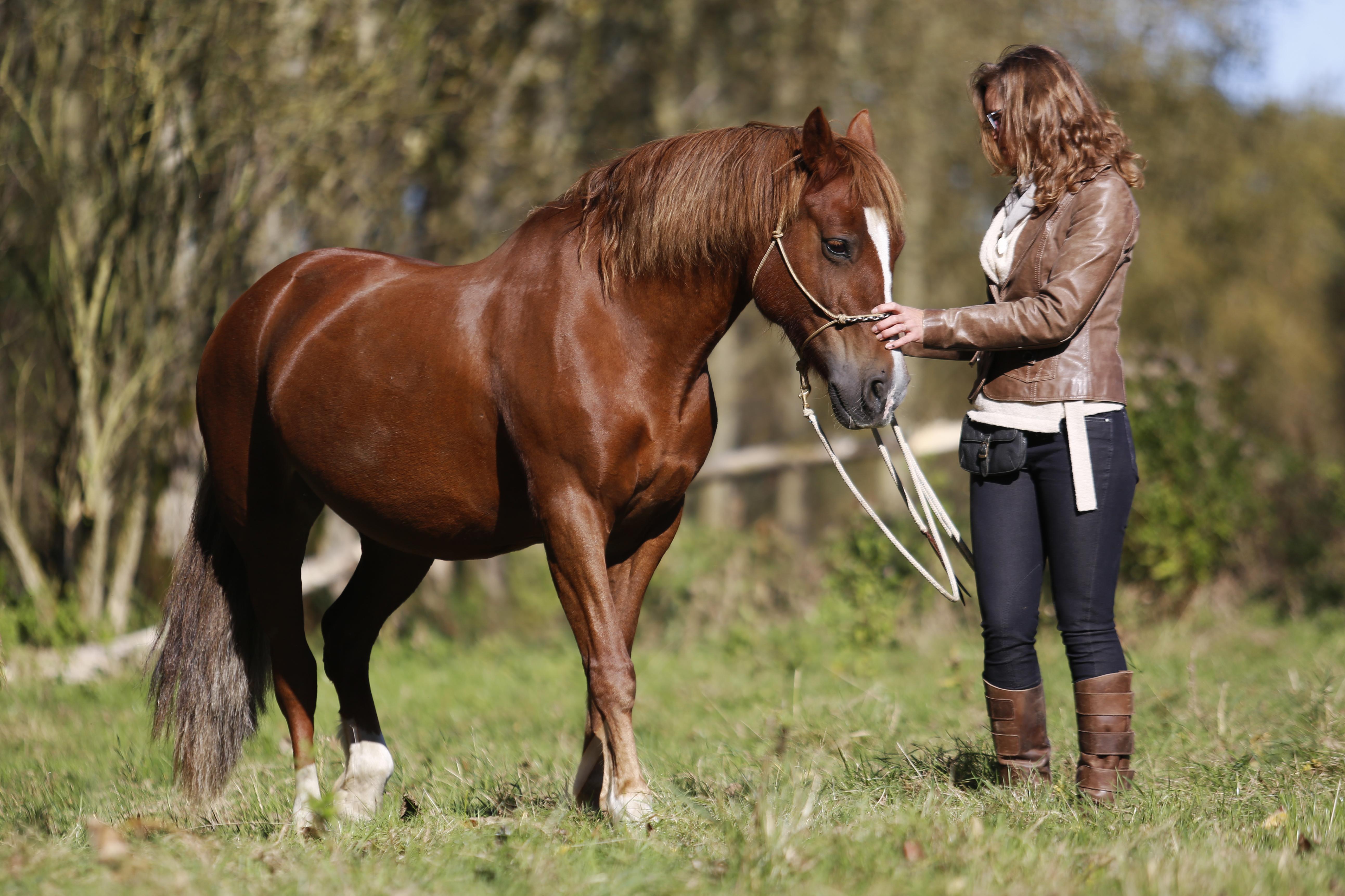 hoe snel kan een paard